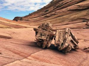 Fatalis boneyard, North Coyote Buttes