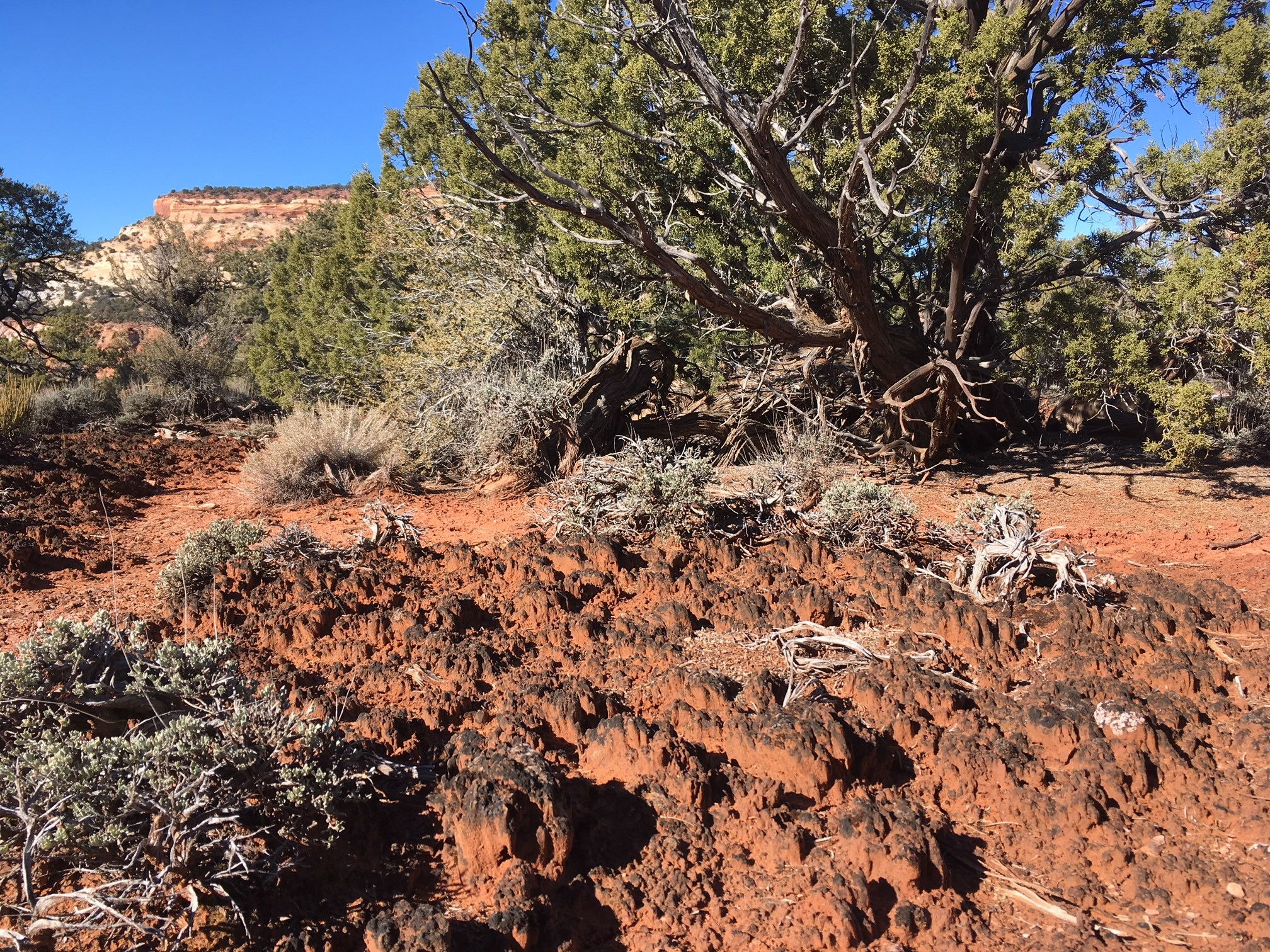 Biological soil crust - The fascinating community that holds the Utah desert in place